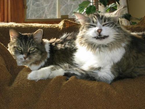 Happy Cat Cheshire Cat Feline Health Center